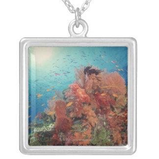 Collier Récif pittoresque des coraux durs, coraux mous 2