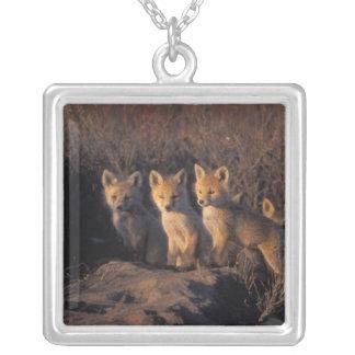 Collier renard rouge, vulpes de Vulpes, kits en dehors de