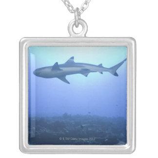 Collier Requin dans l'océan, vue d'angle faible