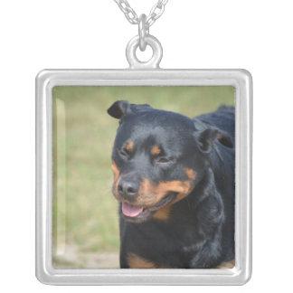 Collier Rottweiler sans astuce