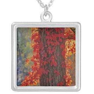 Collier Rouge lumineux de plante grimpante de Virginie en