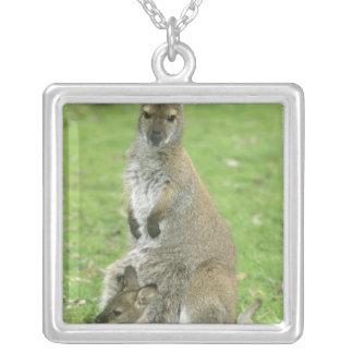 Collier Rufogriseus à col rouge de wallaby, de Macropus),