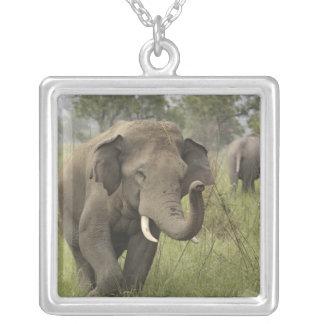 Collier Salutation éléphant indien/asiatique, Corbett