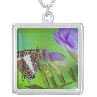 Collier Sammamish, Washington. Papillons tropicaux 14