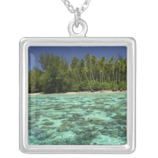 Collier South Pacific, Polynésie française, Moorea 3