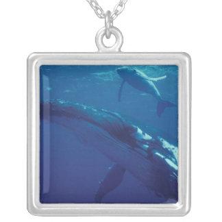 Collier South Pacific, Tonga. baleine et veau de bosse