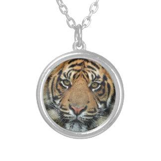 Collier Tigre adulte