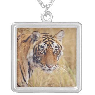 Collier Tigre de Bengale royal observant du