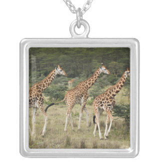 Collier Trio des girafes de Rothschild, lac Nakuru