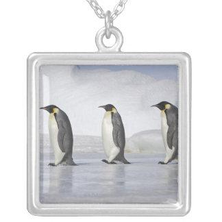Collier Trois pingouins d'empereur, île de colline de