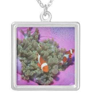 Collier Trois poissons de clown sur l'actinie, mer