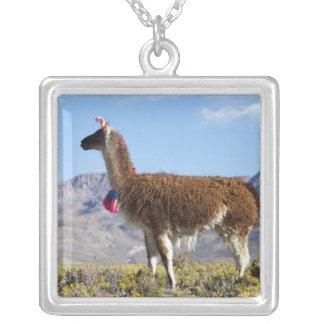 Collier Troupeau décoré de lama dans le Puna, montagnes 2