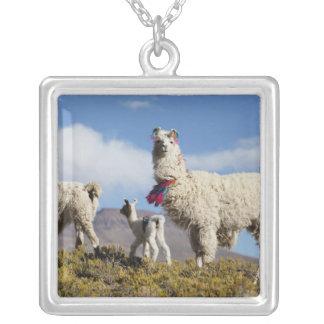 Collier Troupeau décoré de lama dans le Puna, montagnes 3