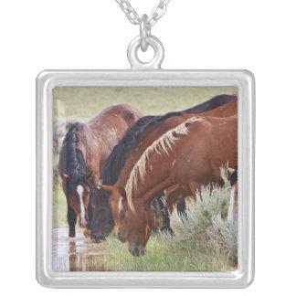 Collier Troupeau sauvage de caballus d'Equus de cheval)