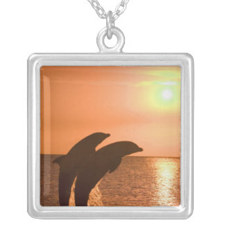 Collier Truncatus de Tursiops de dauphins de Bottlenose) 2