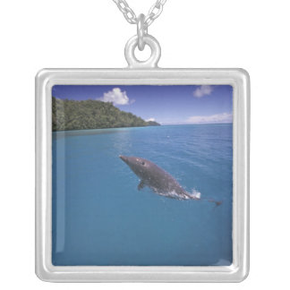 Collier Tursiops 2 de dauphin de Bottlenose de la