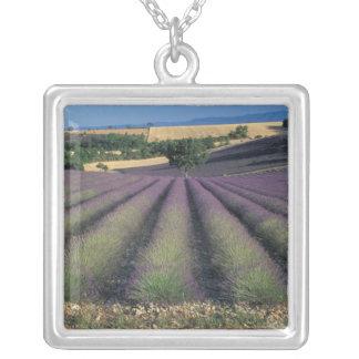 Collier UE, France, Provence, gisements 2 de lavande