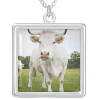 Collier Vache se tenant dans le domaine herbeux