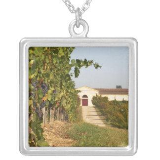 Collier Vignobles, petites vignes de verdot et