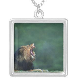 Collier Vue d'un lion (Panthera Lion) ouvrant sa bouche