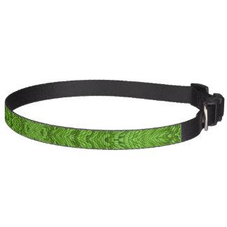 Colliers de chien colorés verts allants collier pour chien