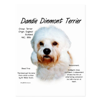 Conception d'histoire de Dandie Dinmont Terrier Carte Postale