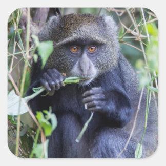 Consommation bleue de singe sticker carré