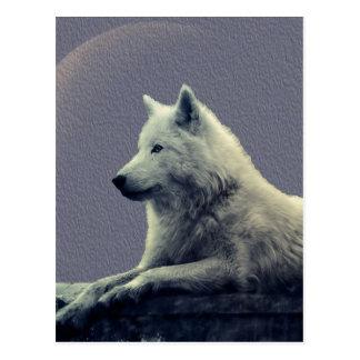 Contemplation de loup cartes postales
