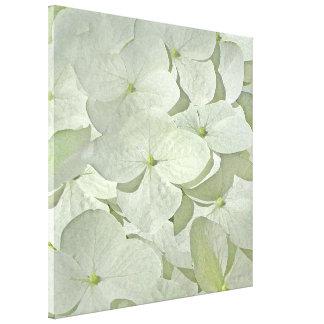 Copie blanche de toile d'hortensia