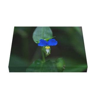 Copie bleue de toile de fleur sauvage de Dayflower