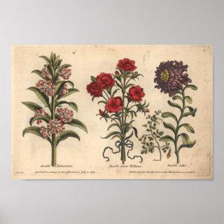 Copie botanique Balsamina d'art de la fleur 1757