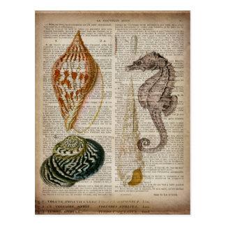 copie botanique de coquillage vintage français de carte postale