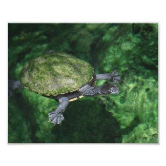 Copie de beaux-arts de tortue verte impression photo