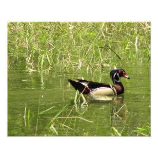 Copie de photo de Drake de canard en bois
