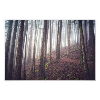 Copie de photo de la brume | de forêt