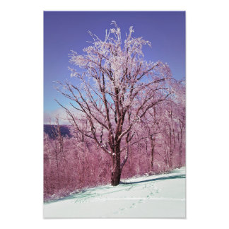 Copie de photographie d'arbre d'érable d'hiver