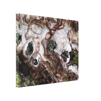 Copie de toile d'arbre et de mousse