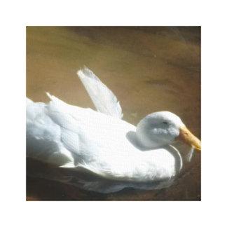 Copie de toile de canard