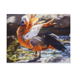Copie de toile de canard de mandarine