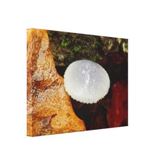 Copie de toile de champignon de stylobates de