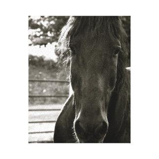 Copie de toile de photo de cheval de Fresian Toiles