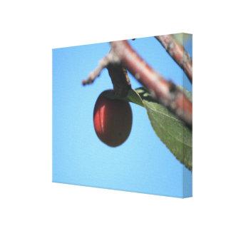 Copie de toile de pomme sauvage 2
