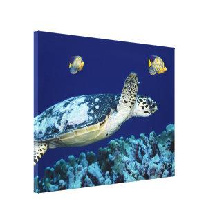 Copie de toile de tortue de mer de vie marine