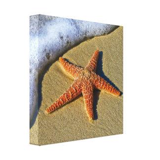 Copie de toile d'étoiles de mer