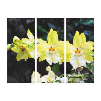 Copie de toile enveloppée par trio d'orchidée