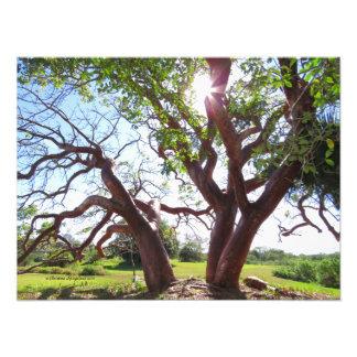 Copie fictive de Sun d'arbres de gombo magnifique Impression Photo