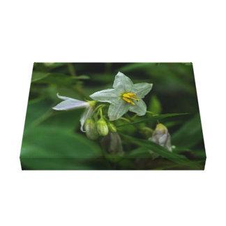 Copie florale de toile de fleur sauvage blanc