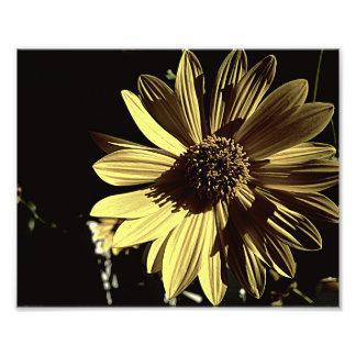 Copie jaune modérée de la photo 10x8