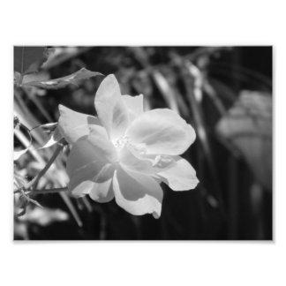 Copie noire et blanche de photo