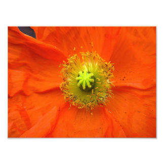 Copie orange de photo de fleur de pavot